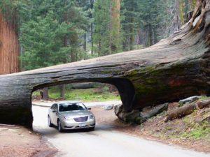 """""""Tunnel Log"""" im Sequoia National Park, Kalifornien"""